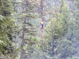 Tree fallers at work.